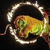 Цирки в Михайловском