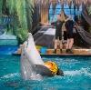 Дельфинарии, океанариумы в Михайловском